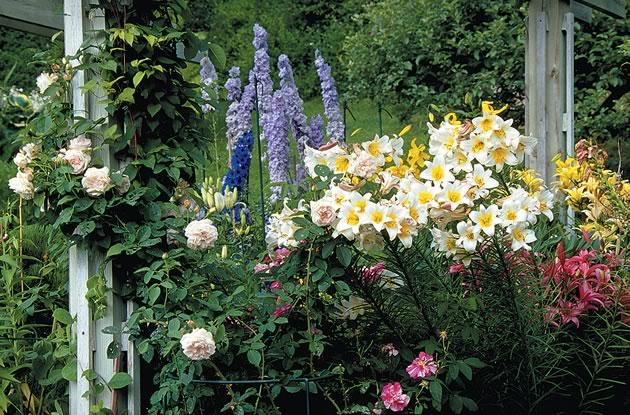 Sinclair_flowers