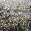 "Jim Reid ~ Nine Mile Swamp, mixed media on plywood 144"" x 72"""