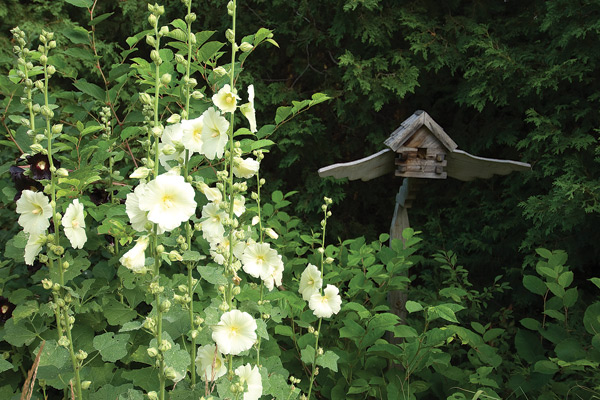 "Hollyhocks dance in the foreground of a birdhouse designed by Keith, who notes wryly, ""Last year's occupants were bumblebees, I think."" Photo by Pete Paterson."