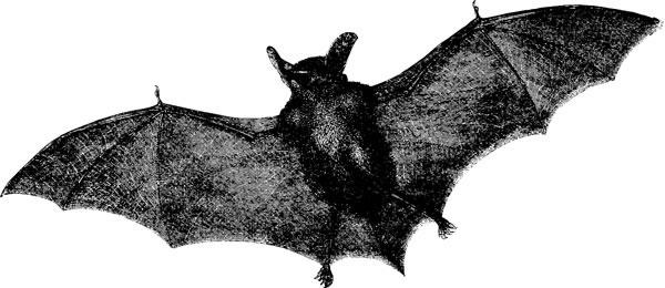 bats_woodcut