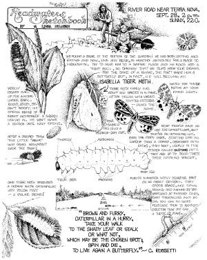 Woolly Bear Caterpillars
