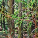 """Hallie Watson - Cedar Forest, 27.5"""" x 19.5"""""""