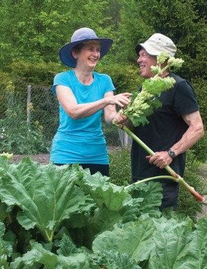 Liz and George Knowles amid the rhubarbs. Because of all the rocks, it's more like excavating than digging, says George of his vegetable patch. Photo by Rosemary Hasner.