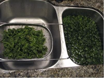 Rinsing Fiddleheads