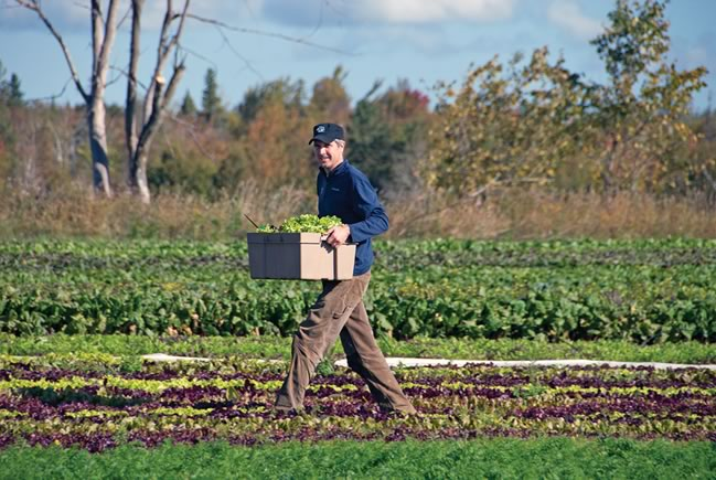 The New Farmer – Field of greens, Brent brings home the lettuce