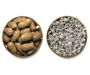 Potatoes and rocks