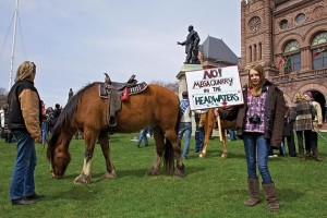 Cosack drove four of his 33 horses downtown to Queen's Park for the Walk to Stop the Quarry protest.