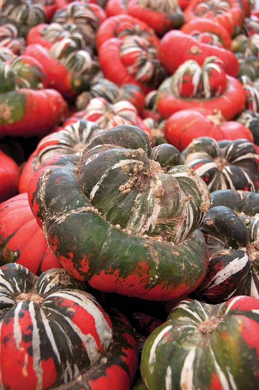 Turban squash Photo by Pete Paterson