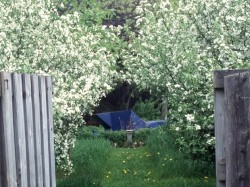 From the Nursery Garden, through Malus sargentii, to the Blue Snake in the Oak Grove.