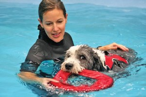 Tammy Bales provided swim therapy to help Gus recover from a leg injury. Photo by Monica Duncan.