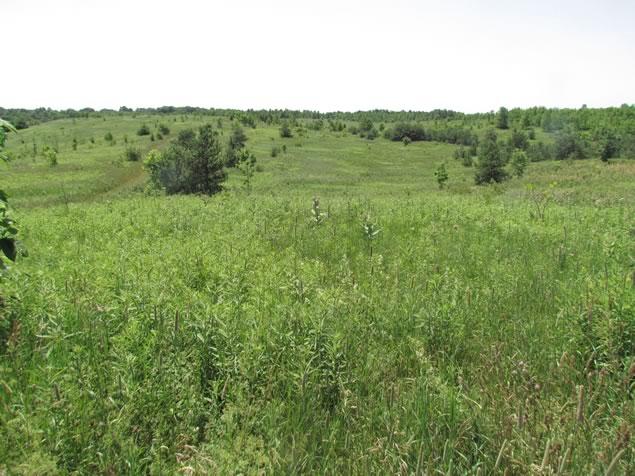 Grassland at Forks of the Credit Provincial Park