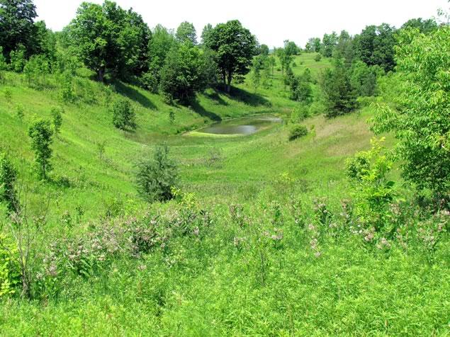 landscape at the Forks