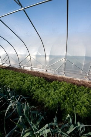 The movable hoop houses travel along metal tracks so various crops can be covered exactly when they need protection. Photo by Rosemary Hasner.
