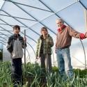 Aidan, Nancy and Jamie harvest the leek crop. Photo by Rosemary Hasner.