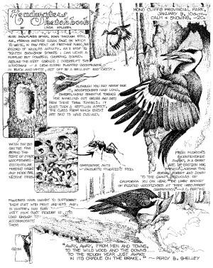 Sketchbook woodpeckers