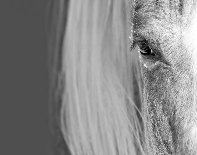 Ellen Cameron ~ Soul of the Horse