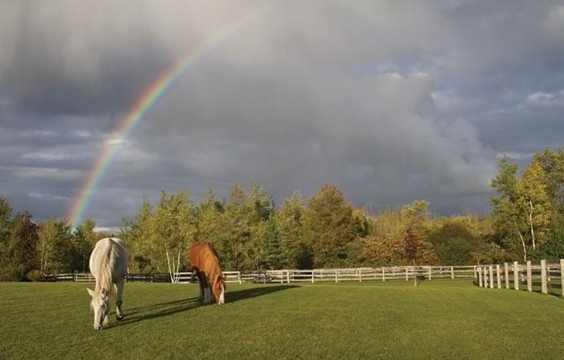 equestrian_ECameron03