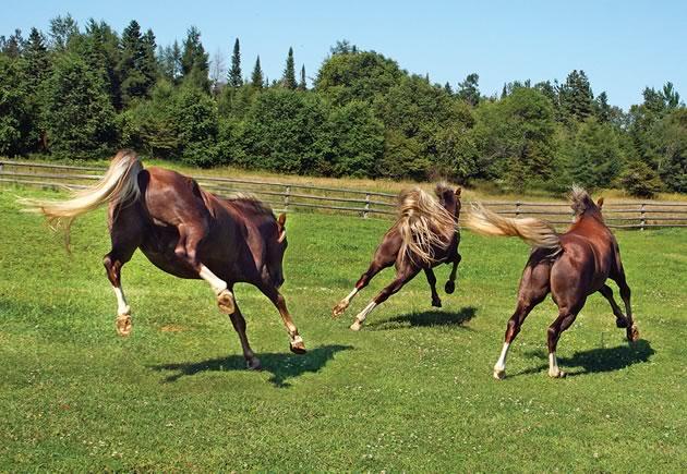 equestrian_ECameron12