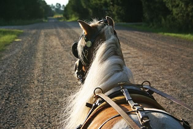 equestrian_ECameron31