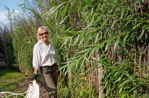 Barbara Guy Long created the living willow wall in the Serenity Garden at Headwaters Health Care Centre to mask the parking lot and loading dock. Photo by Rosemary Hasner / Black Dog Creative Arts.
