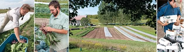 Sharing the Bounty - Far left, Schirin Oeding and Yehuda Nestel harvesting beets. Centre, the gardens at Fiddle Foot Farm. Right, Fiddle Foot's Graham Corbett bagging potatoes. Photos by Pete Paterson.