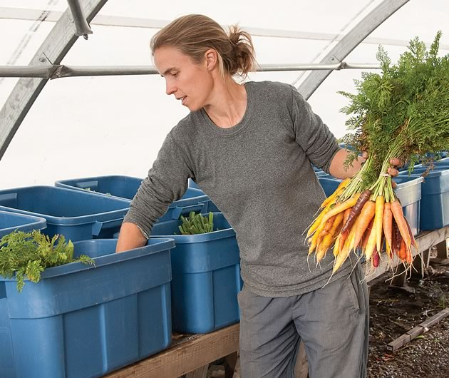 Amy Ouchterlony divides carrots into CSA boxes. Photo by Pete Paterson.