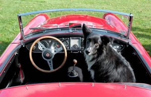 "1961 MGA owned by Mark Barry; ""Little Bud"" along for the ride. Photo by Pete Paterson."