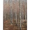 "Lynne Schumacher ~ Colours of Fall, Caledon oil on canvas 30 x 24"""