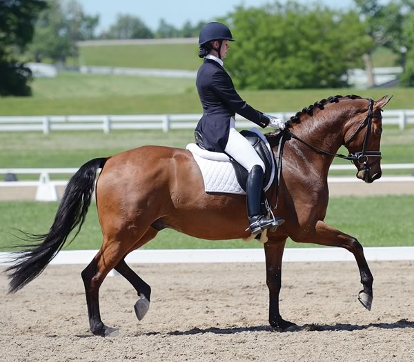 Leah Wilson and Rendezvous perform an extended trot at the Caledon Pan Am Equestrian Park last year. Photo by Doug Palmer.