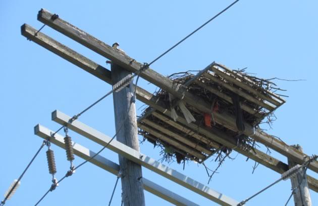 nesting platform close up