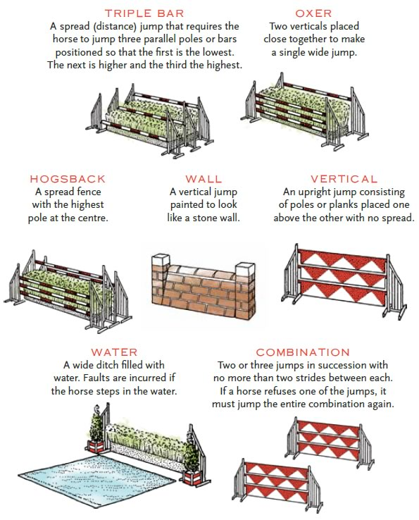 Obstacles typical of show jumping
