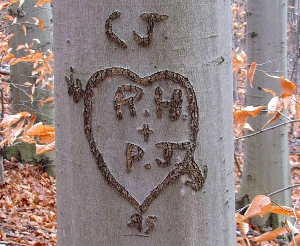 beech tree love inscription
