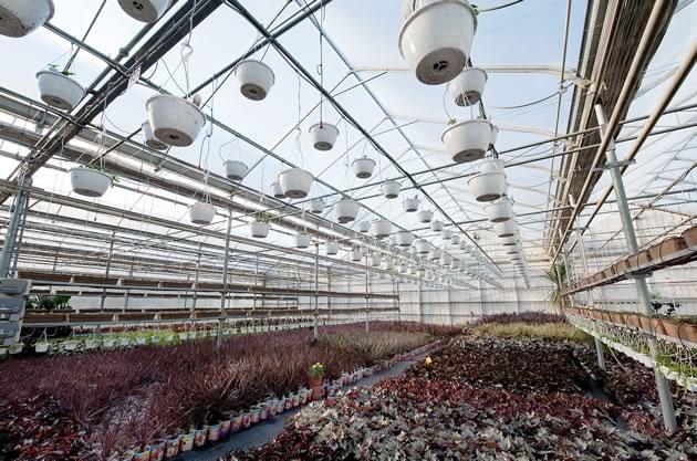 Sant_Greenhouses21