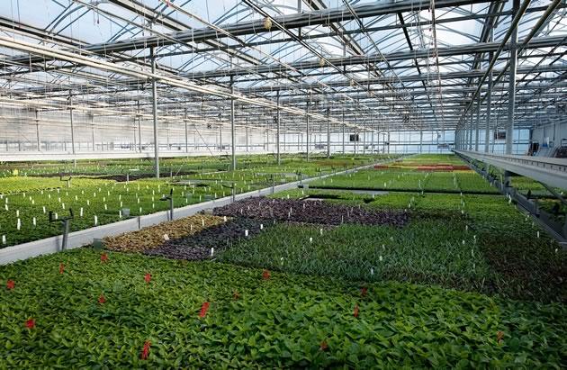 Sant_Greenhouses27