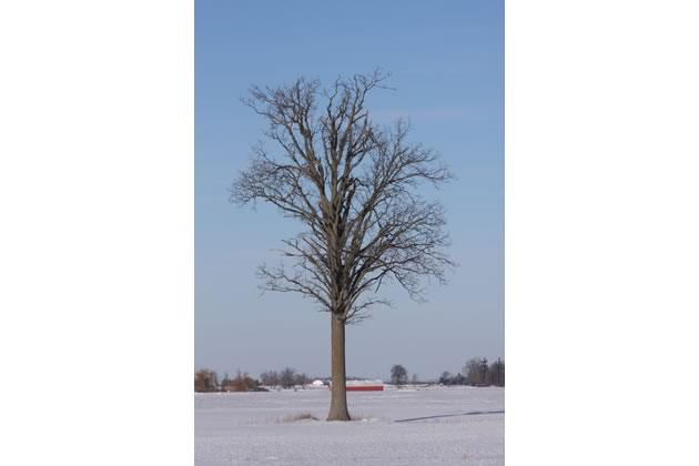 The early farmers of Peel left us a legacy of regal trees. We should do the same for future generations.
