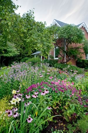 By late summer, the garden at the front of the house has become a bouquet of pinks, including Echinacea (common and Sombrero series), bee balm and obedient plant, punctuated with a few late daylilies. Photo by Rosemary Hasner / Black Dog Creative Arts.
