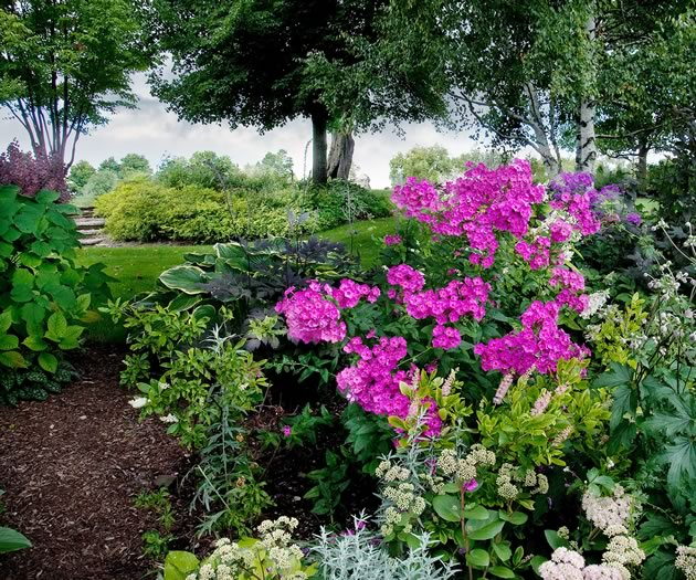 Common phlox mingles with Japanese anemone, sedum and hosta to provide a burst of late summer glory east of the house. Photo by Rosemary Hasner / Black Dog Creative Arts.