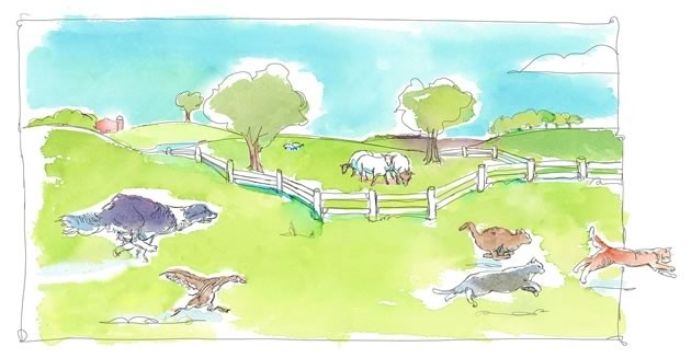 Ferdinand followed Duke around all day, trying to chase cats with him and bark when visitors arrived. Illustration by Shelagh Armstrong.