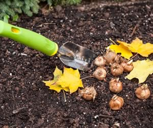 Fall is time to plant bulbs