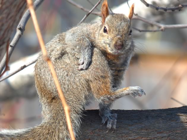 Supersquirrel limbers up
