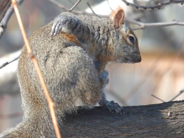 Supersquirrel making a rude gesture