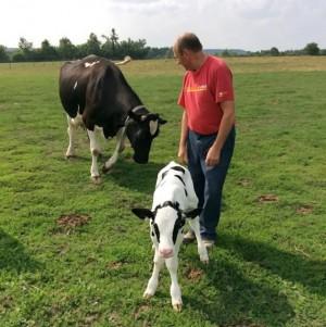 Hunter Andrews tending a Holstein calf.