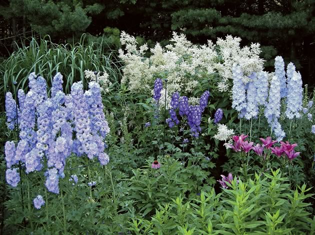 Giant Fleeceflower