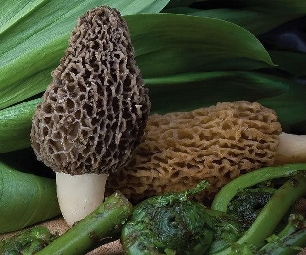 Morels, ramps and fiddleheads