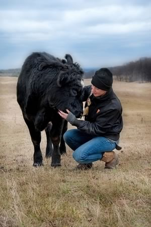 Carl's daughter Nikki with an amiable member of the ranch's herd of black Angus cattle. Photo by Rosemary Hasner / Black Dog Creative Arts.