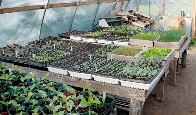 WholeVillage_greenhouse2