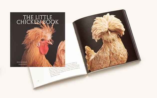The Little Chicken Book