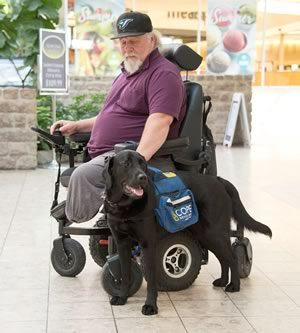 Bear, a Labrador-golden retriever cross is taking over from Radar, Joe Karwacki's previous service dog. As they learn about each other, the two are developing their own special bond. Photo by Pete Paterson.