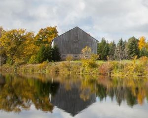 Amid fall colours, the century-old barn stands tall and strong. Photo by Pam Purves.