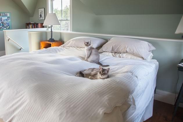 athome_wente9827_cats